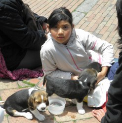 A girl offering puppies in the park (with parents, not pictured)